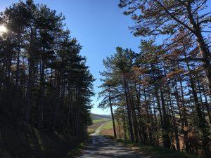 Route de St Gervazy, à 10km de la A75, sortie 19.